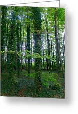 Ridgeway Trees Greeting Card