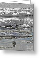 Riding The Ice Flow  Greeting Card
