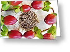 Ring Around The Garlic Greeting Card