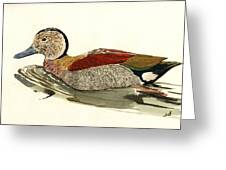 Ringed Teal Greeting Card