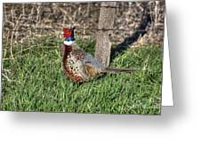 Ringneck By A Fence Post Greeting Card