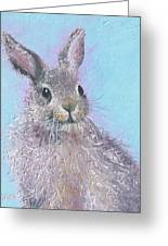 Easter Bunny Painting - Ringo  Greeting Card