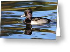 Rings Around Ring-necked Duck Greeting Card