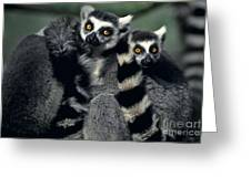 Ringtailed Lemurs Portrait Endangered Wildlife Greeting Card