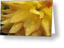 Rip City Dahlia Greeting Card