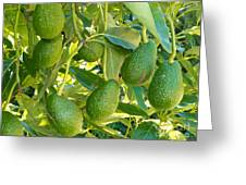 Ripe Avocado Fruits Growing On Tree As Crop Greeting Card