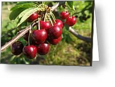 Ripe Cherries Greeting Card