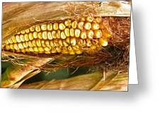 Ripe Corn Greeting Card