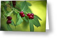 Red Berries Botanical Christmas Art Greeting Card