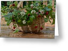 Wild Strawberries And White Clover Greeting Card