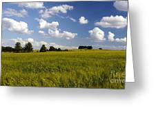 Green Belt Land 2 Greeting Card