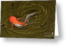 Ripples In A Shallow Pool Greeting Card
