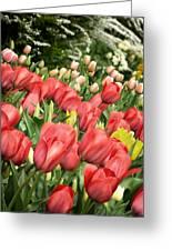Rising Spring Greeting Card