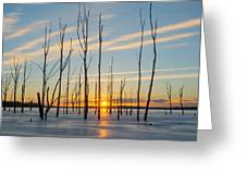 Rising Throught The Sticks Greeting Card