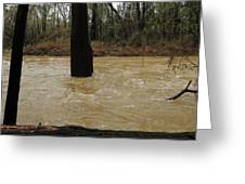 Rising Waters With Timber Greeting Card