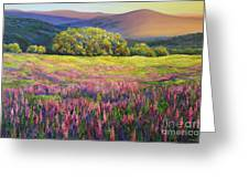 River Bank Lupines In California Greeting Card