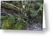 River Bend Park 4 Greeting Card
