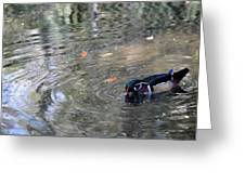 River Duck Greeting Card