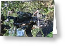 River Guard Greeting Card