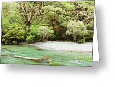 River In Rainforest Wilderness Of Fiordland Np Nz Greeting Card