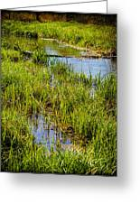 River Kennet Marshes Greeting Card