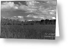 River Of Grass Greeting Card by Andres LaBrada