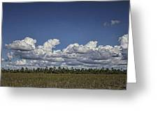 River Of Grass Greeting Card by Anne Rodkin