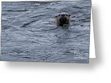River Otter   #0695 Greeting Card