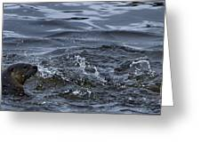 River Otter   #0750 Greeting Card