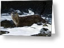 River Otter   #0978 Greeting Card