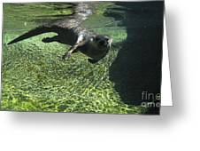 River Otter-7714 Greeting Card