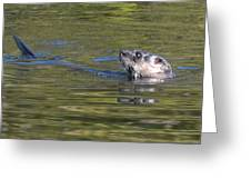 River Otter Greeting Card by Julie Cameron