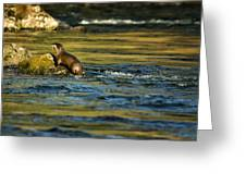 River Otter On A Rock Greeting Card