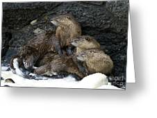 River Otter Trio   #0931 Greeting Card
