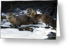 River Otters   #1030 Greeting Card