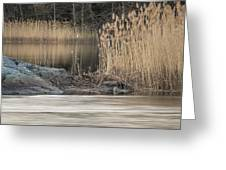 River Rock And Reeds Greeting Card