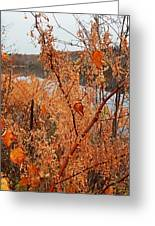 River Side Foliage Autumn Greeting Card