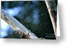 River Spider Web   Greeting Card