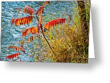 River Sumac Greeting Card