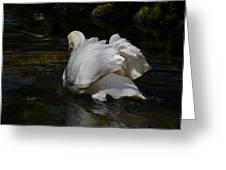 River Swan Greeting Card