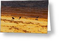 Riverbank Birds Greeting Card