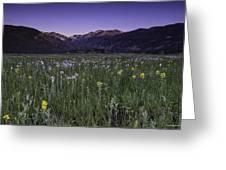 Rmnp Moraine Park Flora Sunrise Greeting Card by Tom Wilbert