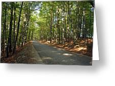 Road In Forest  Greeting Card