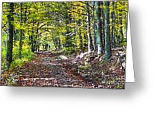 Road In The Forest Greeting Card