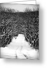 Road Less Traveled Greeting Card by Jennifer Compton