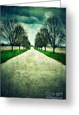 Road Lined By Trees Greeting Card