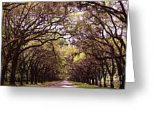 Road Of Trees Greeting Card