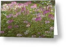 Road Side Beauty Greeting Card