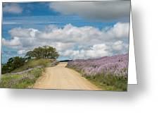 Road Through Lupine Greeting Card