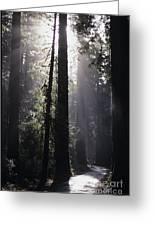 Road Through Redwoods Greeting Card
